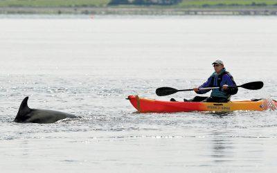 Kaum Ruhe für Delfin in Eckernförde