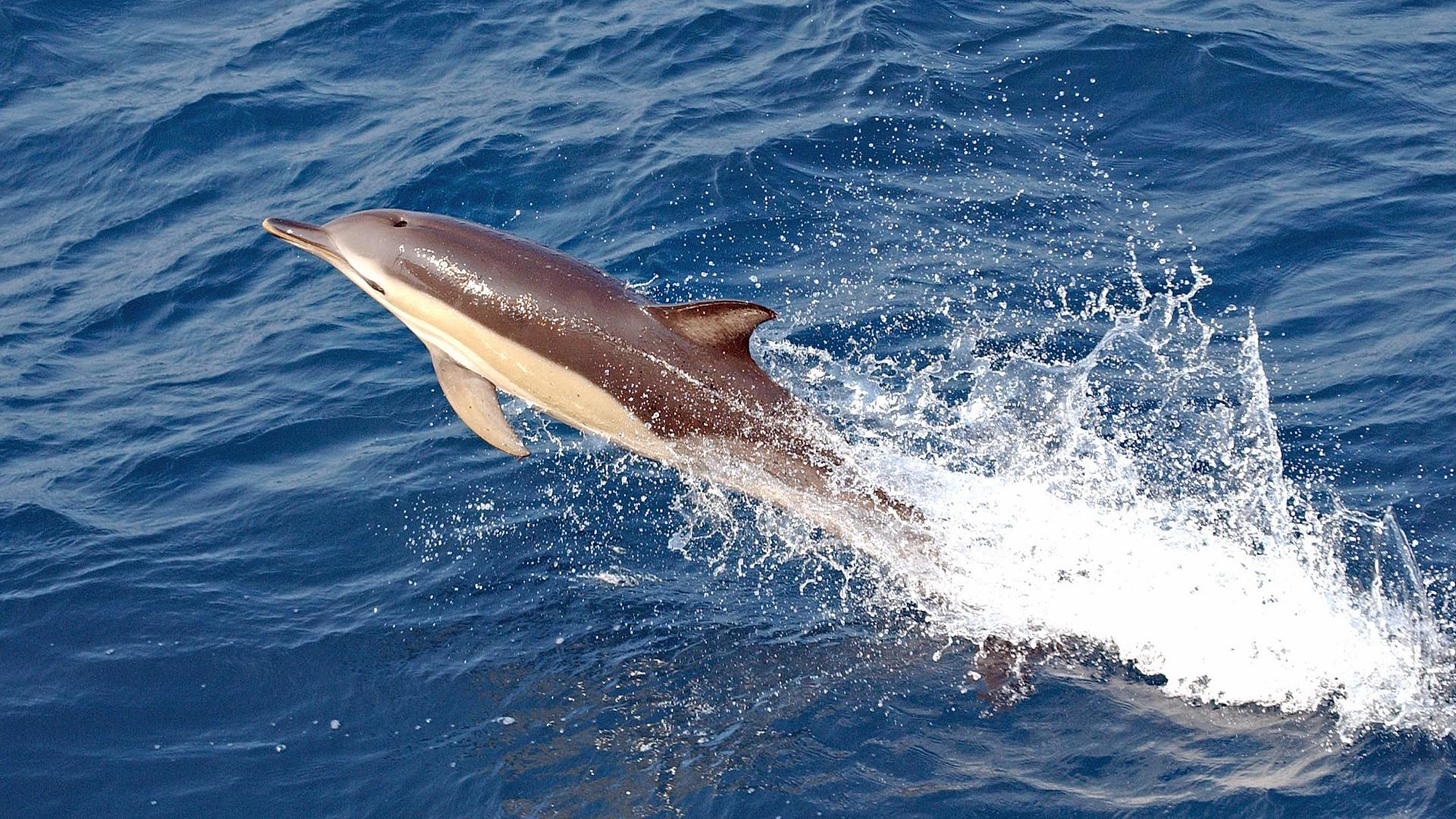 Kaum Ruhe für Delfin in Eckernförde.