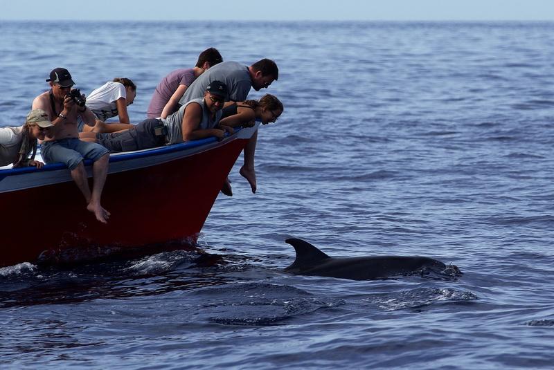 Forschung für die Delfine vor La Gomera.