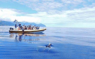 Delfine und Wale in Freiheit erleben – Ein Leitfaden für sanftes und respektvolles Whale Watching