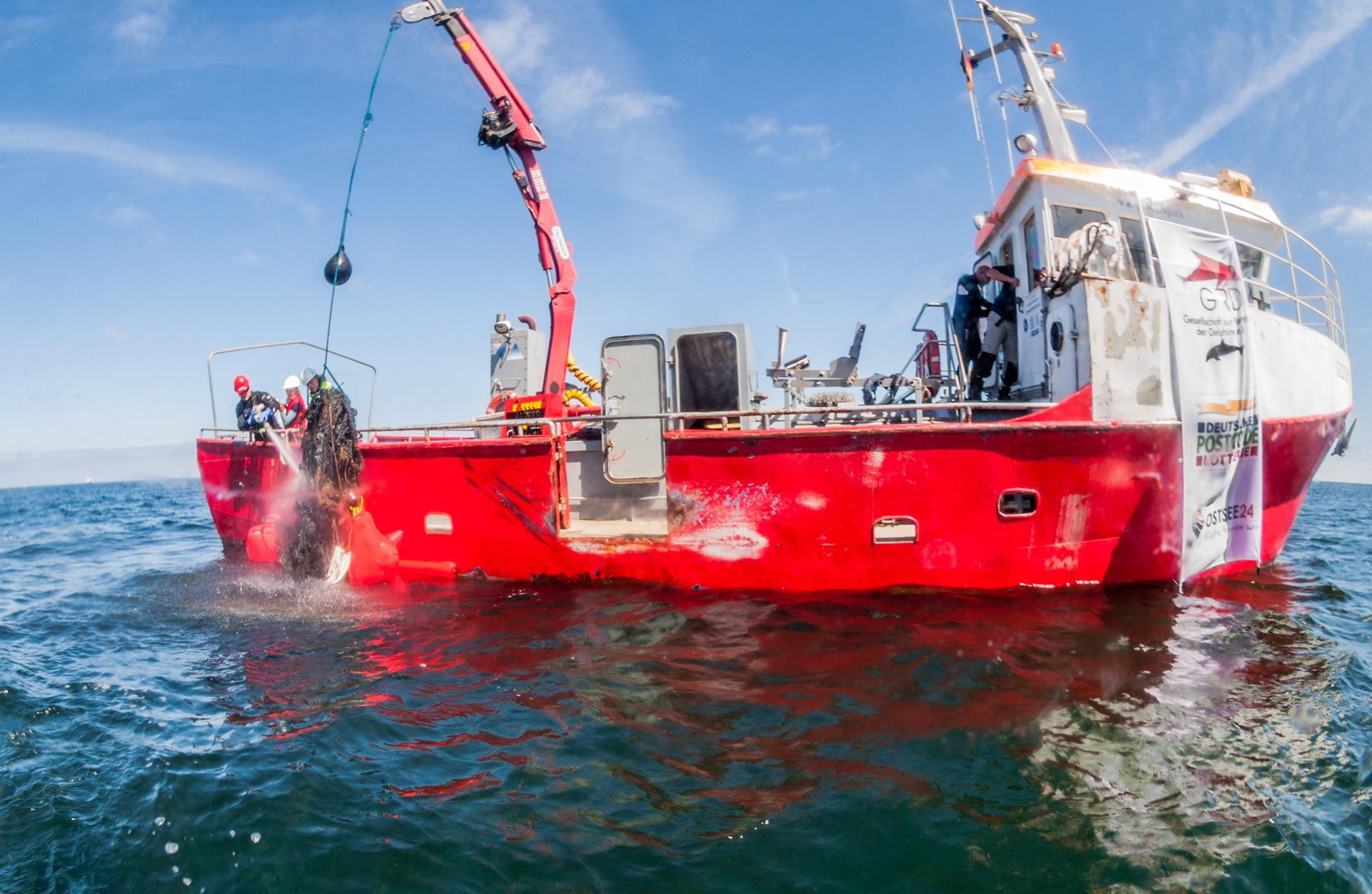 Rettet die Schweinswale: Mit einer Patenschaft für die Bergung von Geisternetzen in der Ostsee