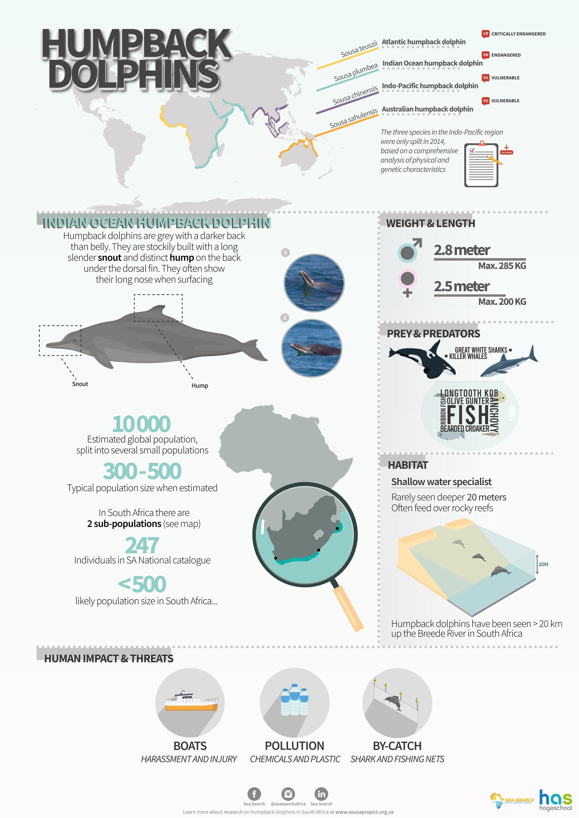 Infografik: Buckeldelfine, Verteilung und Charakteristika von Dr. Simon Elwen from Sea Search and Coen Soeteman from HAS University