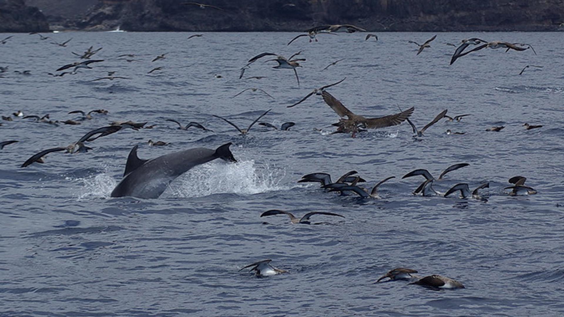 Delfine vor La Gomera.