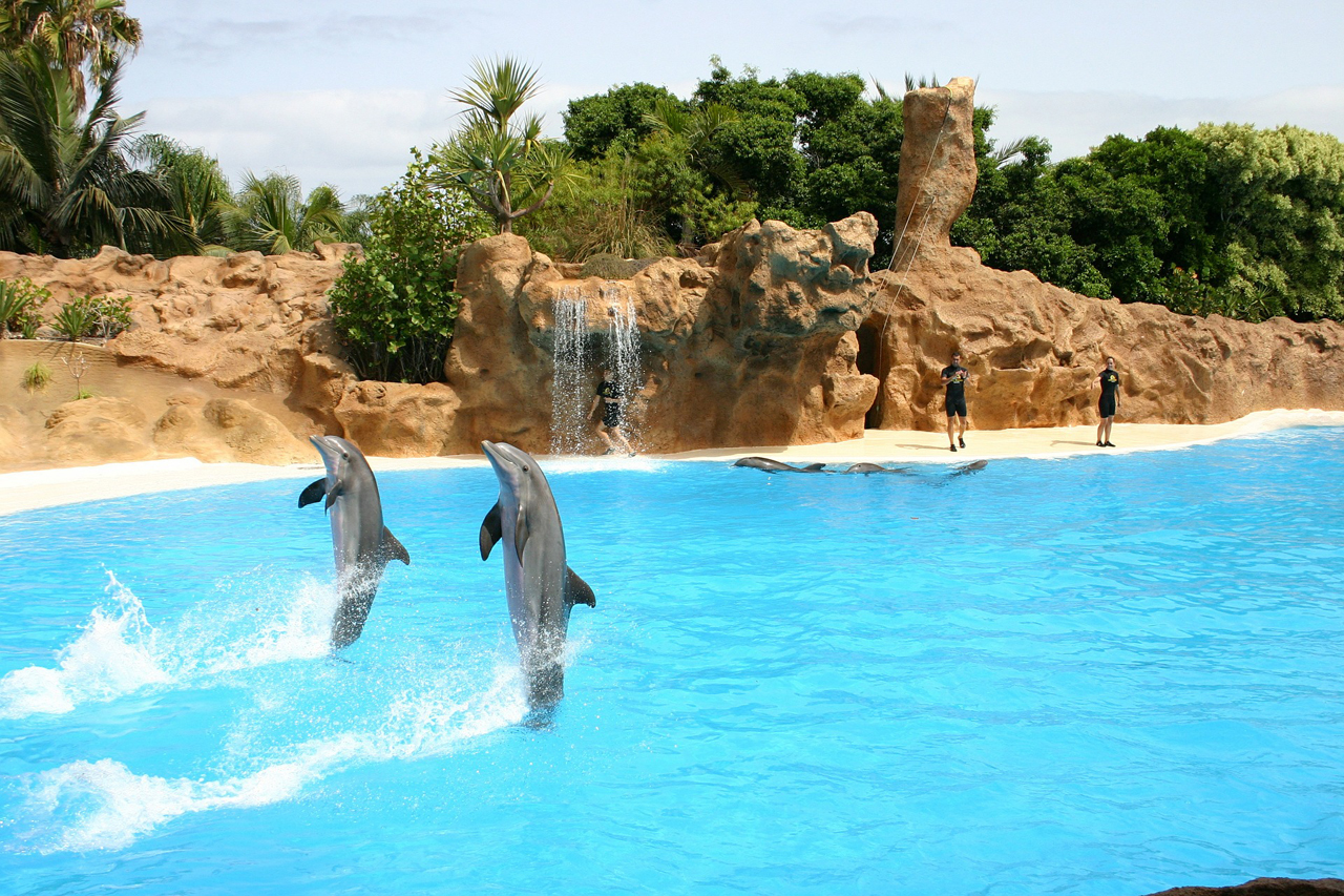 GRD-Biologin Denise Wenger dokumentiert 1997 die Delfinmassaker im Golf von Biskaya.
