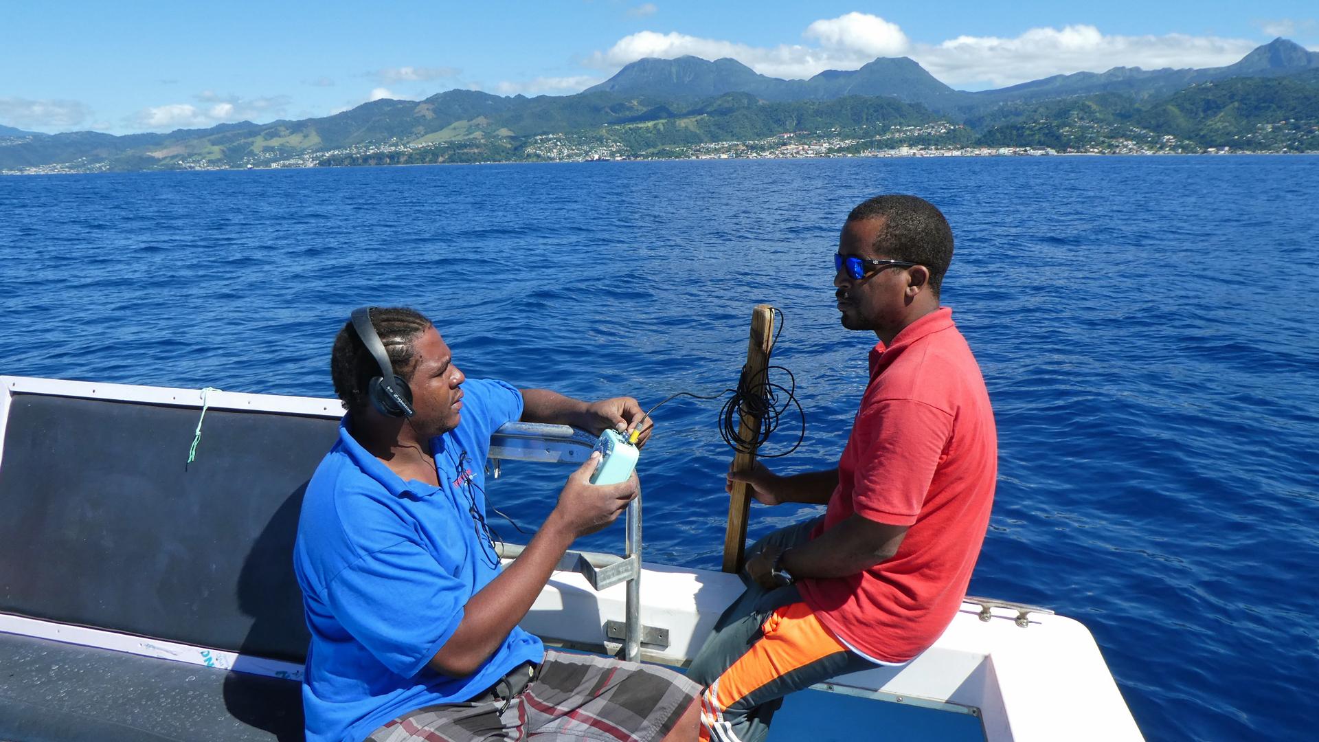 Hydrophon im Einsatz während des Pottwal Super-Pod Treffens vor Dominica.