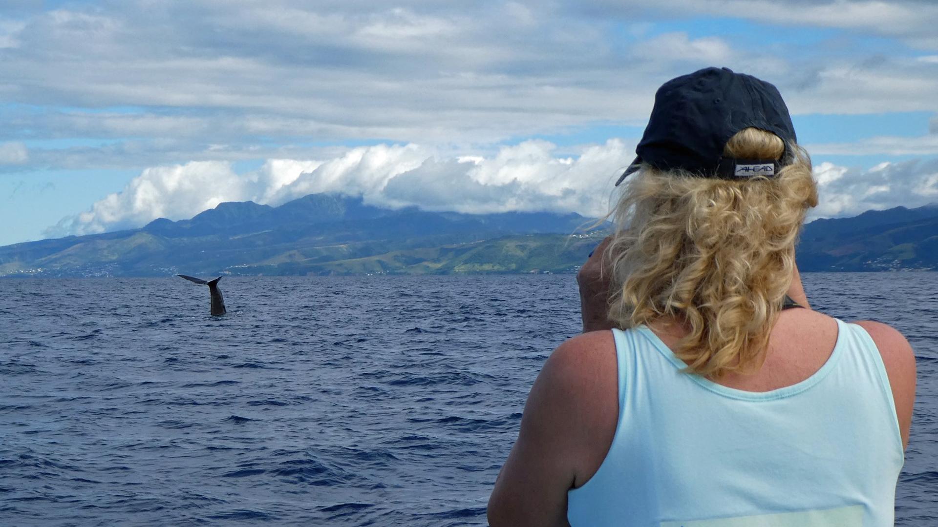 Petra Charles beobachtet den Pottwal Super-Pod vor Dominica.