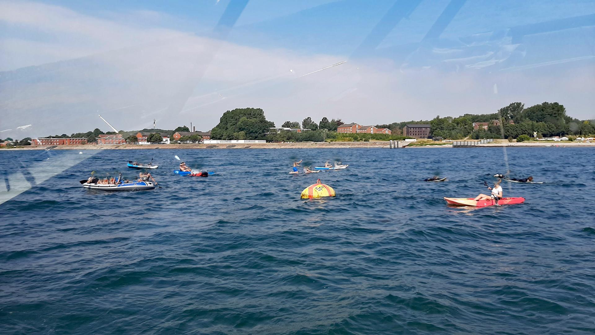 Overtourism mitverantwortlich für den Tod des Eckernförder Delfins