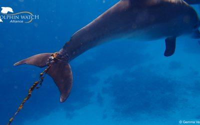 Rettet den kleinen Delfin Latif!