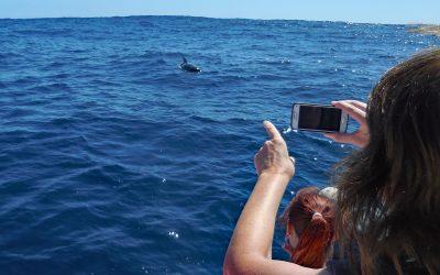 Delfin- und Walschutz vor La Gomera: Wir blicken nach vorn