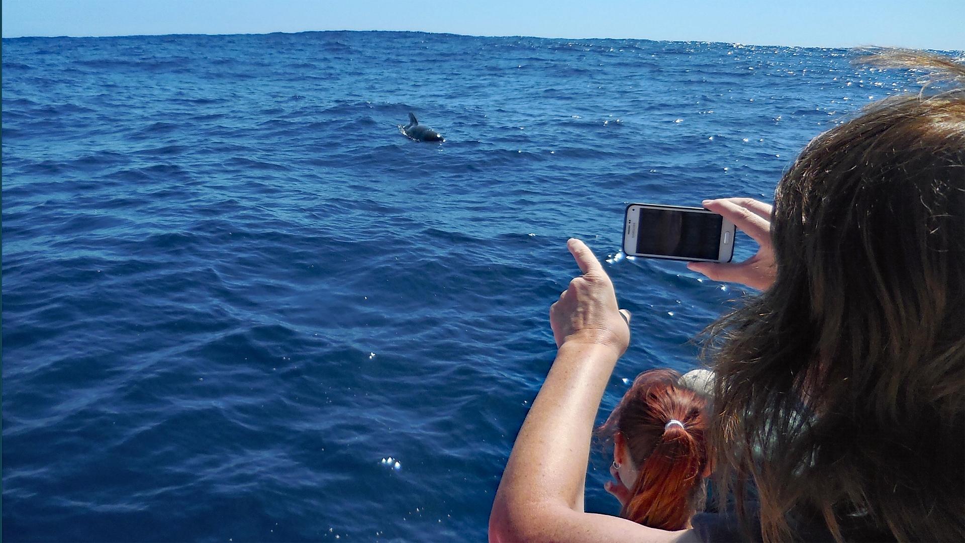 Als Meeresbotschafter beim Delfin- und Walschutz vor La Gomera mithelfen!