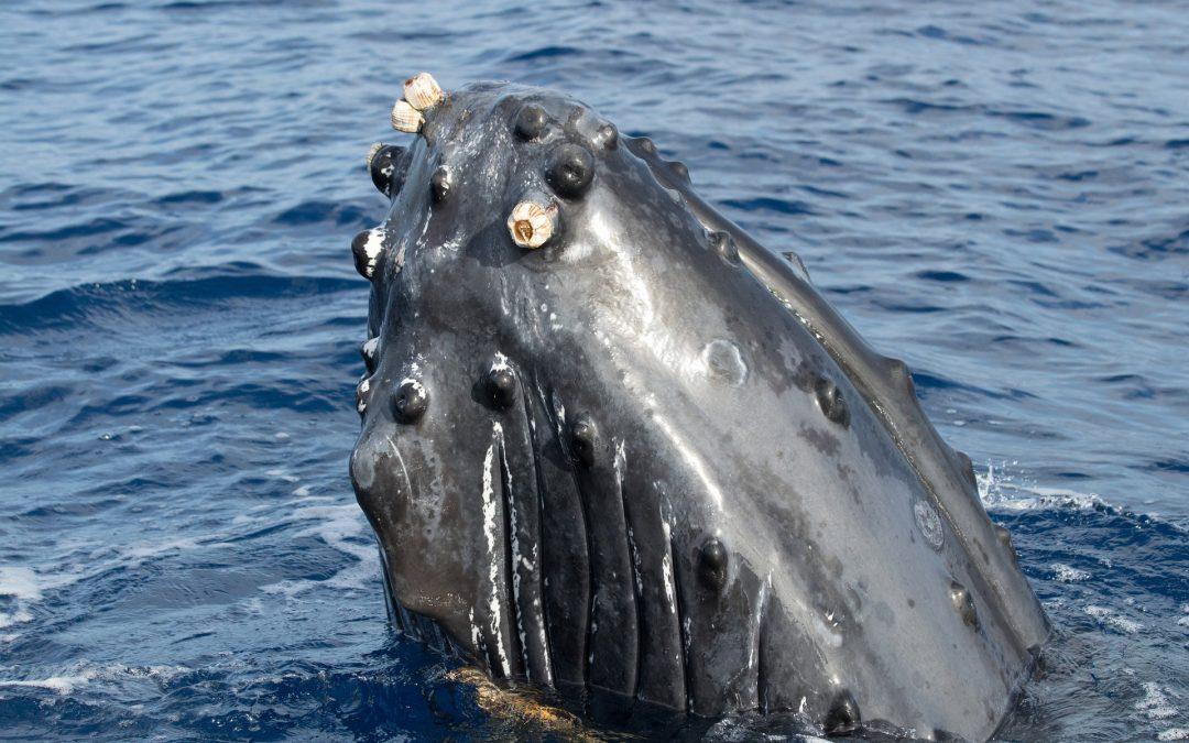 Können Wale und Delfine pupsen?