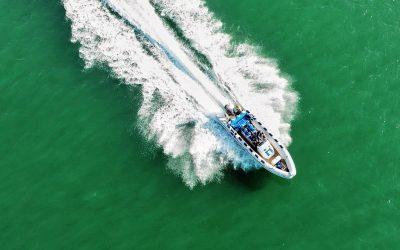 Speedbootfahrten können Schweinswale töten