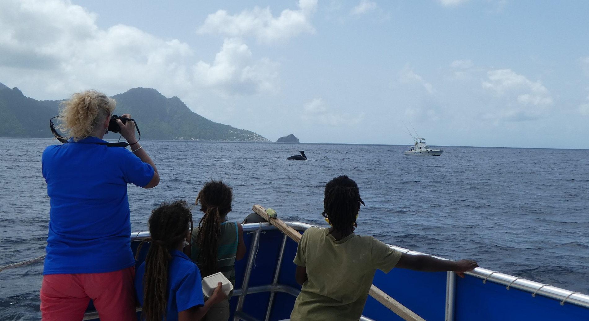 Pottwal Super-Pod Treffen vor Dominica