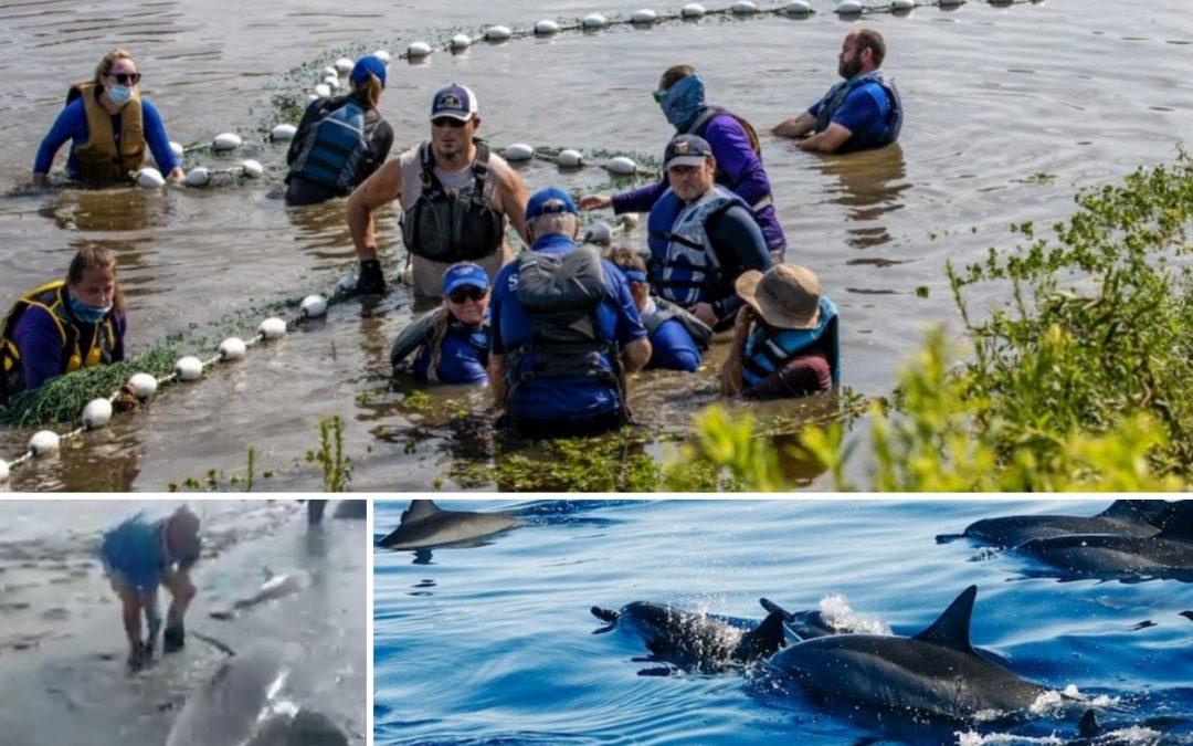 Menschen retten Delfine – Delfine retten Menschen