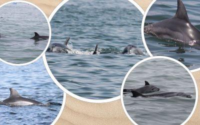 Peru: Delfinschutz statt Dynamitfischerei